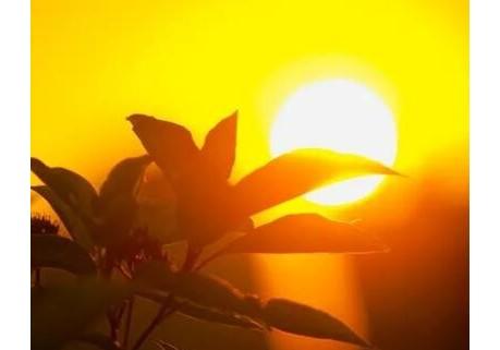 组诗《心灵在阳光月色下徜徉》